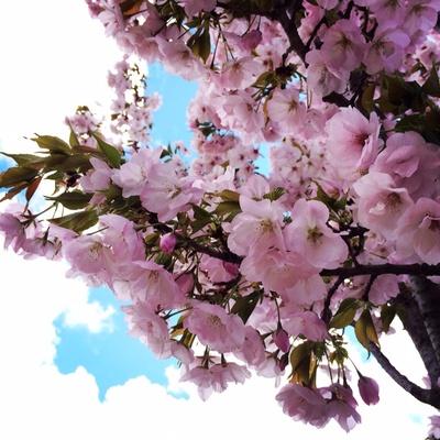 お花見(*^_^*)