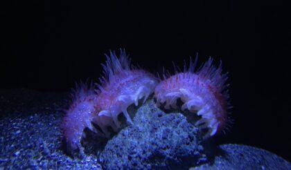 深海魚水族館🐟